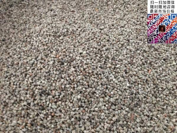 荆条种子图片