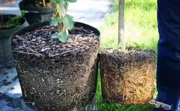 外国苗圃绿化苗木