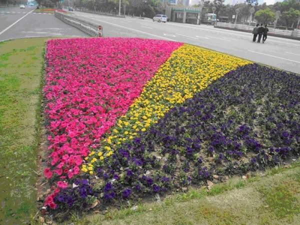 草本花卉在齐发国际登录中的应用及配植