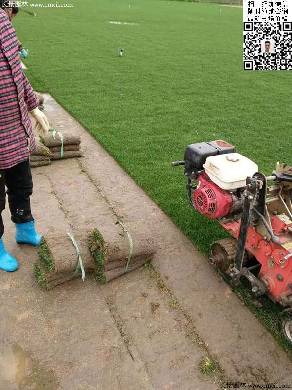 我公司草坪场正在铲草坪