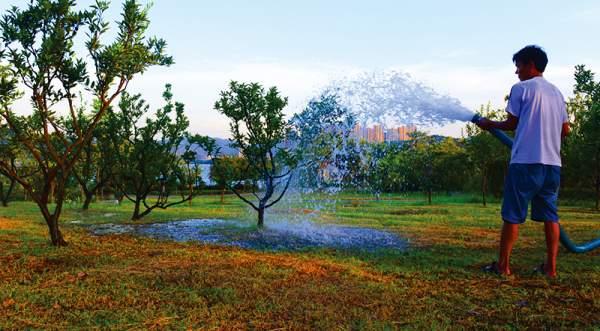 苗木抗旱浇水灌溉