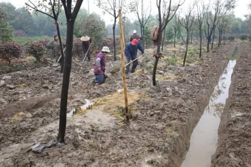 苗木排水防涝