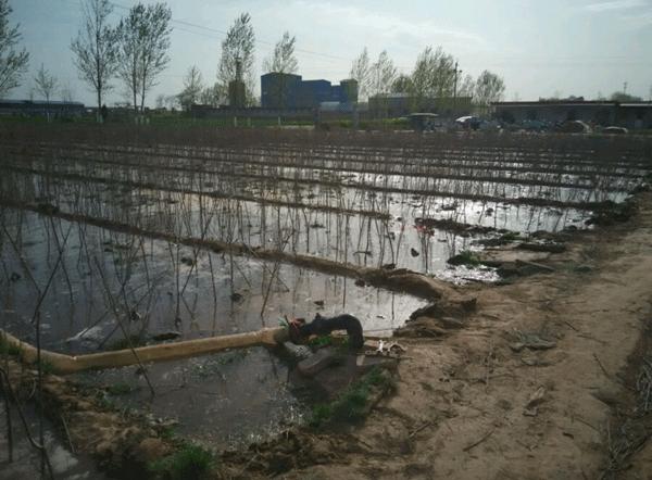 寿星桃基地--长景园林