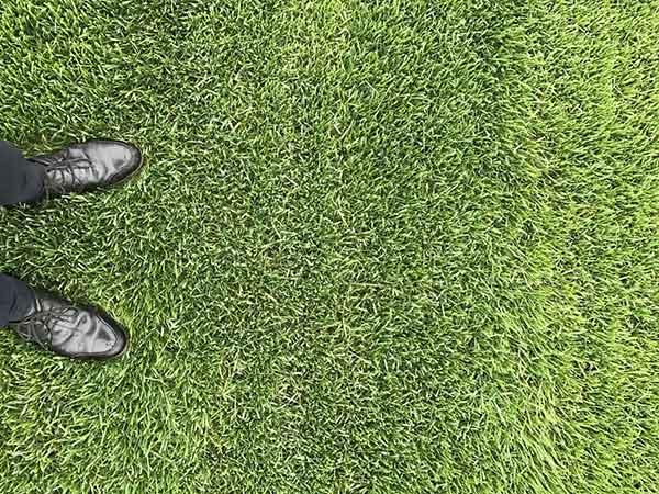 四季青草坪图片