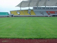 足球场天然草坪