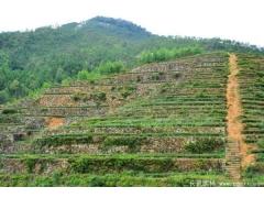 植草护坡绿化图片