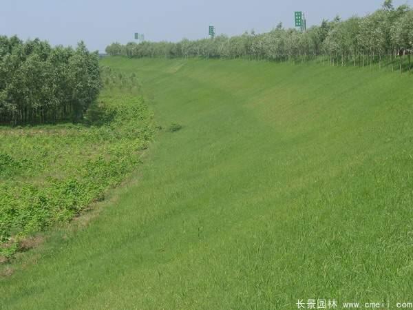 河提边坡植草护坡绿化图片