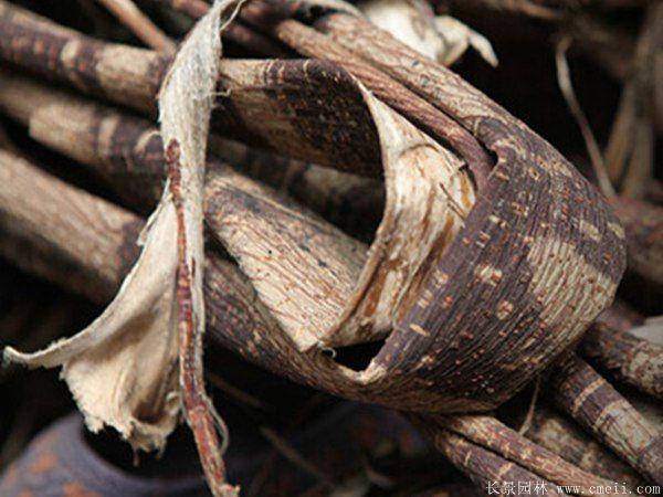 构树皮细节图片