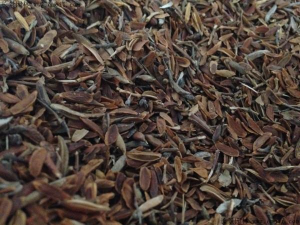 丁香种子图片