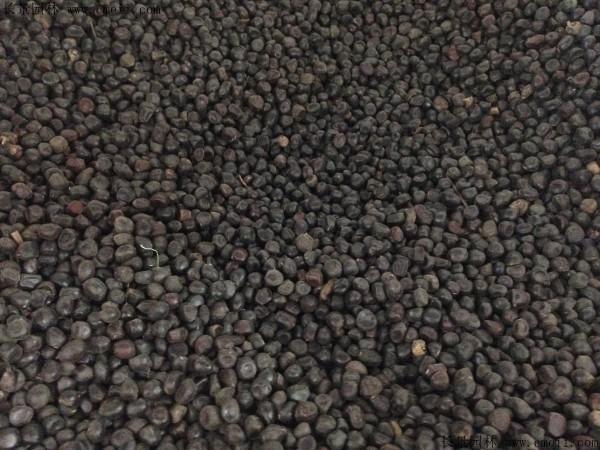 牡丹种子图片