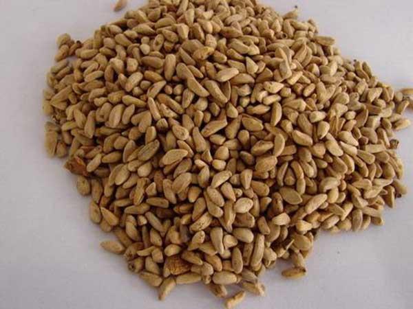 石榴种子图片