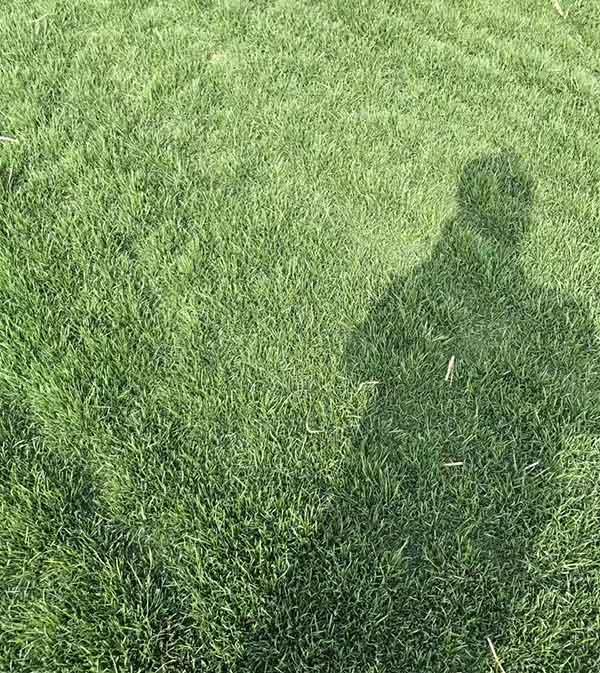早熟禾草坪图片