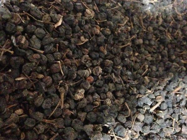 八角金盘种子图片