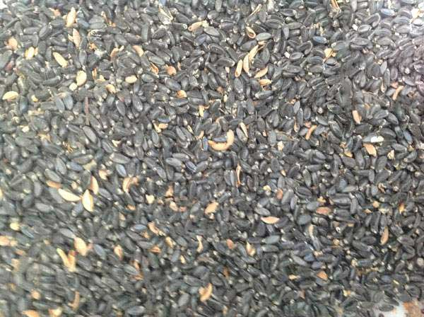 小叶黄杨种子图片