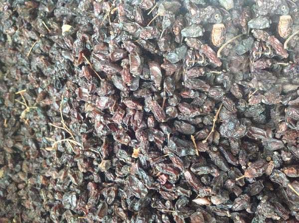 红叶小檗种子图片