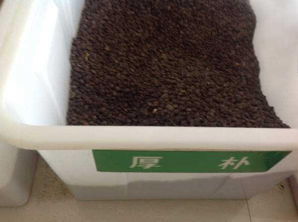 厚朴种子图片