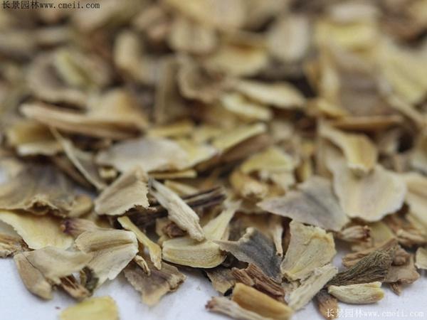 花环菊种子图片