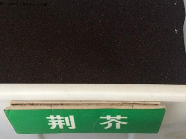 荆芥种子图片