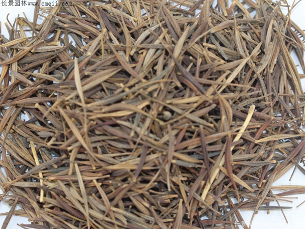硫华菊种子图片