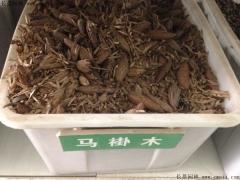 马褂木种子