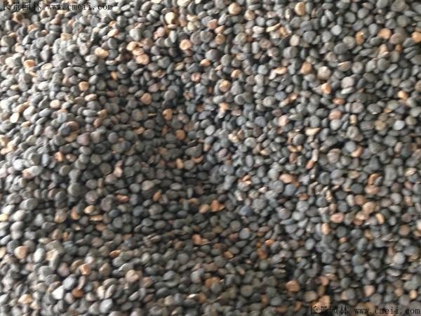 曼陀罗种子图片