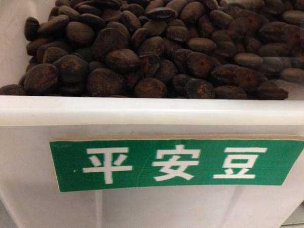 平安豆种子图片