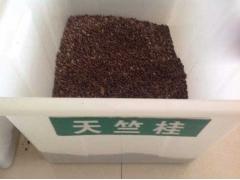 天竺桂种子