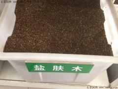 盐肤木种子