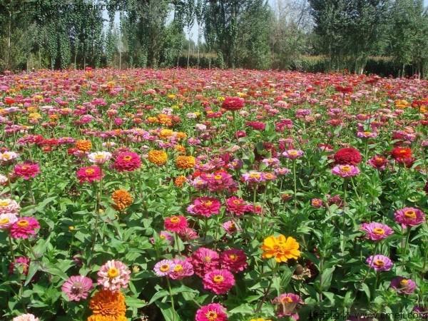 野花组合开花图片