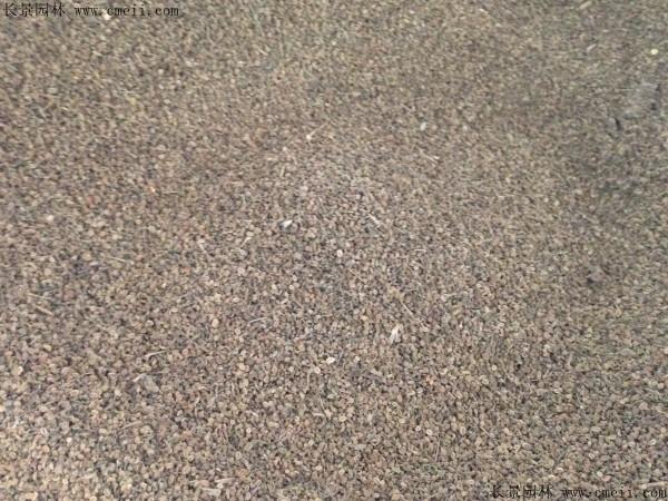 野菊花种子图片