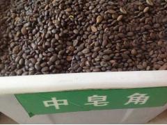 中皂角种子