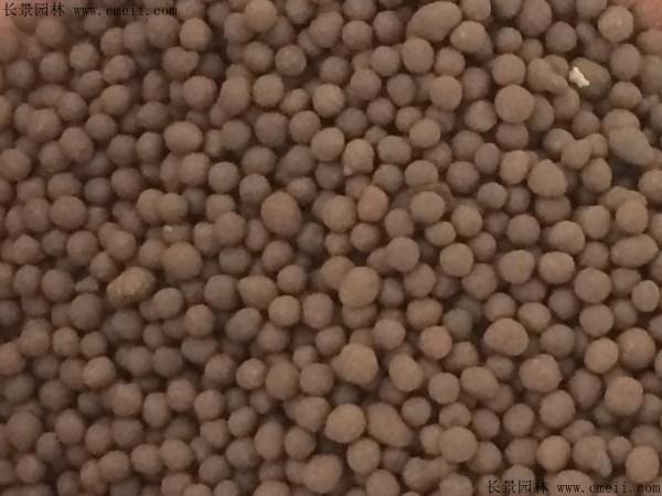 紫苏种子图片