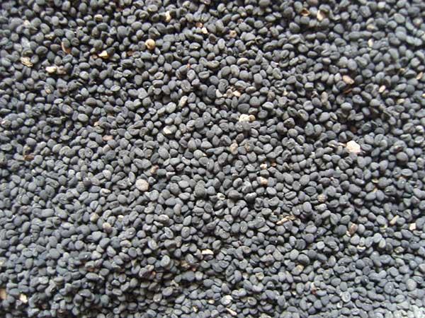 黄芩种子图片