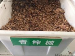 青榨槭种子