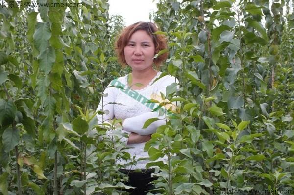 丝棉木种子发芽出苗图片