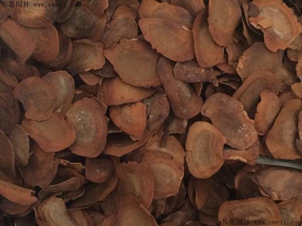 桃花心木种子图片