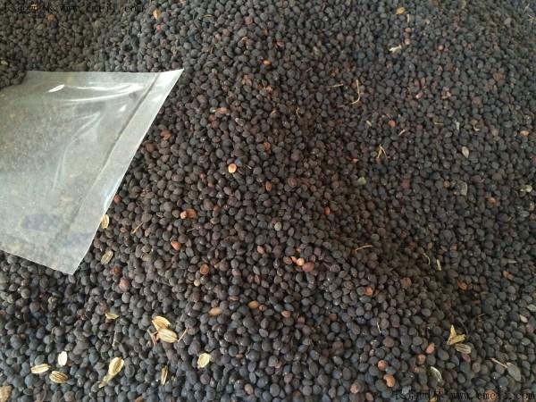 车桑种子图片