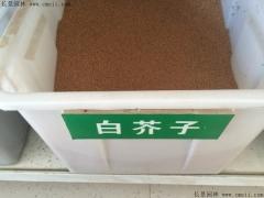 白芥子种子