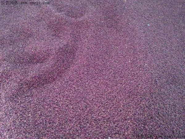 蛇莓种子图片