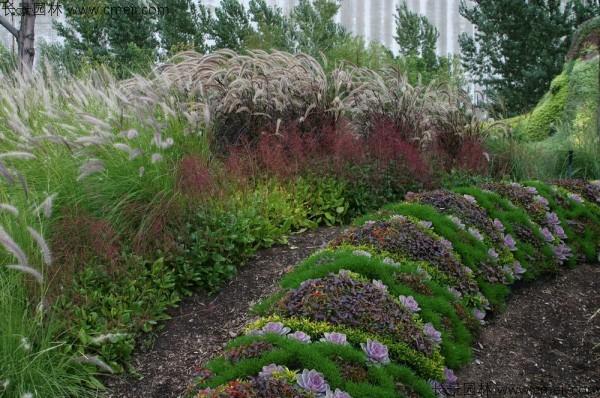 野芒草种子发芽出苗图片