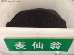 麦仙翁种子