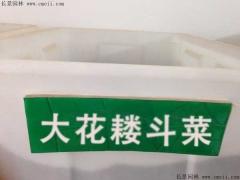 大花耧斗菜种子