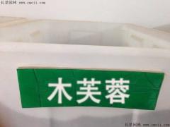 木芙蓉种子
