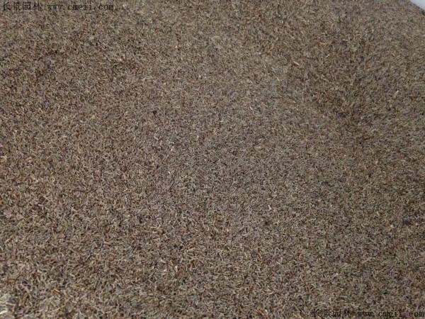 水飞蓟种子图片