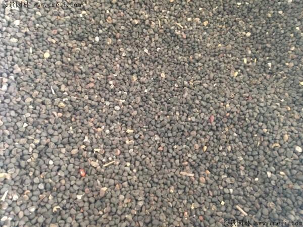 野茉莉种子图片