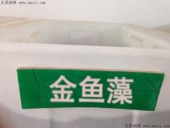 金鱼藻种子
