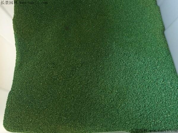 金鱼藻种子图片