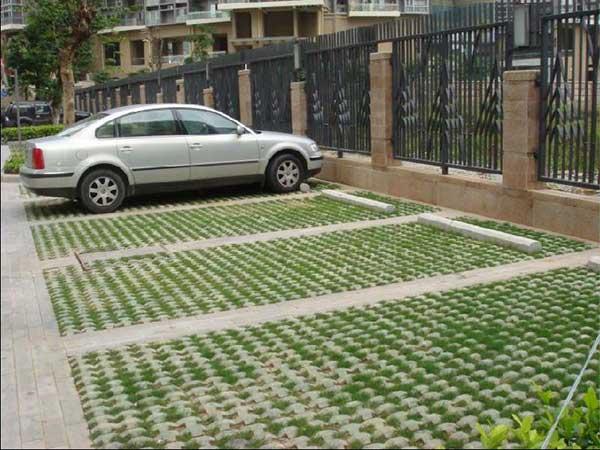 停车场草地栽种草地种子绿化