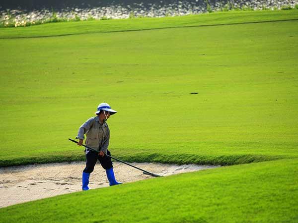 高尔夫球场草坪图片