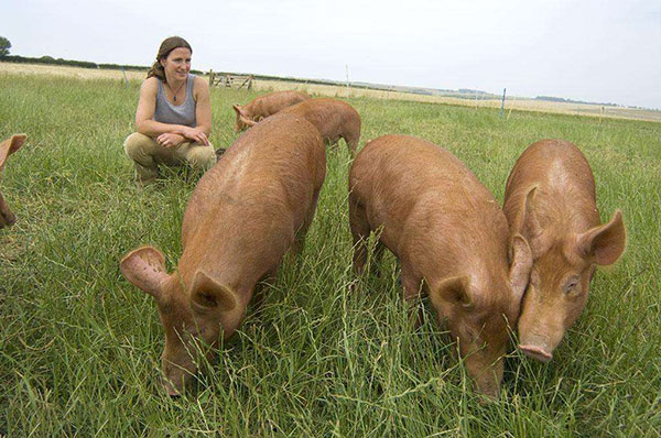 牧草养猪养殖